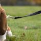 Valley Veterinary Hospital - Pet Food & Supply Stores - 506-452-1117