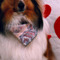 B-Pro Grooming - Pet Grooming, Clipping, & Washing - 905-840-0499