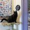 Guelph Cat Clinic - Veterinarians - 519-821-2287