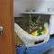 Guelph Cat Clinic - Kennels - 519-821-2287