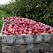 Verger La Pommalbonne - Producteurs et expéditeurs de fruits et légumes - 819-835-9159