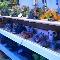 Nestor's Aquariums & Pets - Aquariums & Supplies - 204-774-9322