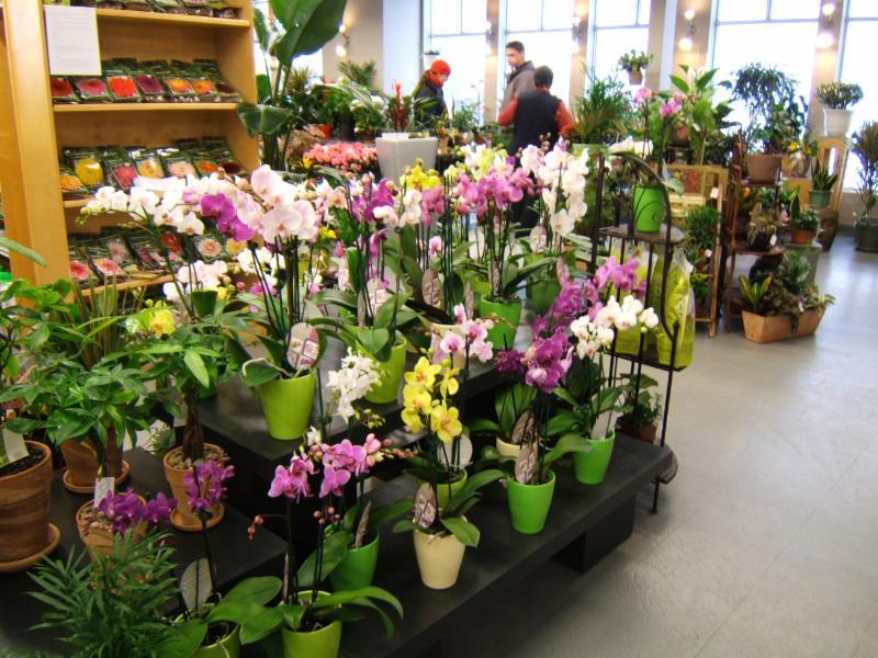 Gauthier Fleurs et Jardins - Photo 1
