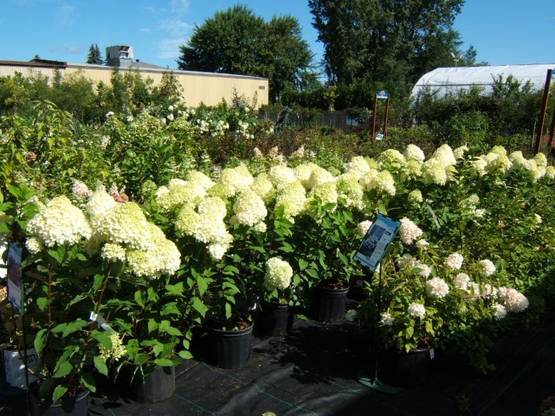 Gauthier Fleurs et Jardins - Photo 3