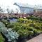 Gauthier Fleurs et Jardins - Photo 4