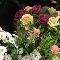Gauthier Fleurs et Jardins - Centres du jardin - 819-375-4813