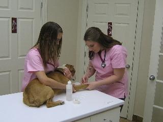 Hôpital vétérinaire Acadia - Photo 7