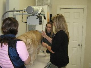 Hôpital vétérinaire Acadia - Photo 8