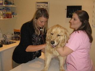 Hôpital vétérinaire Acadia - Photo 10