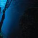 Boutique Du Plongeur - Matériel de plongée libre - 450-667-4656