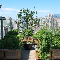 Watermark Gardens - Landscape Contractors & Designers - 604-323-1448