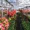 Pépinière Concolor Enr - Centres du jardin - 819-364-5282