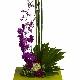 Roy's Flower House - Florists & Flower Shops - 905-821-0400