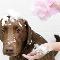 Pawsitive Pet Care - Pet Sitting Service - 613-266-5062