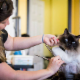 Pauline's Pet Grooming - Pet Grooming, Clipping, & Washing - 250-493-1040