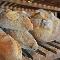 Galoto - Matériel de boulangerie - 819-293-5274