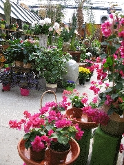 Centre Floral Hollandia - Photo 4