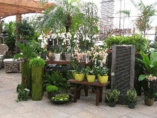 Centre Floral Hollandia - Photo 5