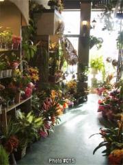 Fleuriste Fleurs de Cactus - Photo 4