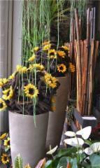 Fleuriste Fleurs de Cactus - Photo 10