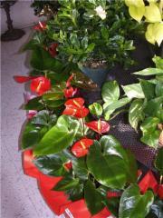 Fleuriste Fleurs de Cactus - Photo 7