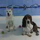 Ready Set Fetch - Pet Grooming, Clipping, & Washing - 416-239-7416