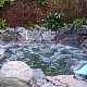 Ponds In The City (Indoor & Outdoor Water Garden Specialists) - Ponds, Waterfalls & Fountains - 416-489-8166