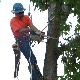 Services d'Emondage Professionnels Goulet - Service d'entretien d'arbres - 514-591-9119