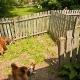 Adorable Animal - Kennels - 514-624-9694