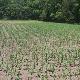 Young Sod Farms - Topsoil - 905-892-2681