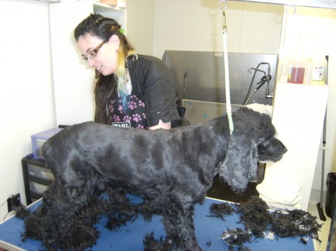 Henderson Animal Hospital - Photo 5