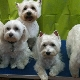 Barking Beauties - Pet Grooming, Clipping, & Washing - 709-368-2233