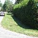 Yvan Beaulieu Hedges & Gardens - Service d'entretien d'arbres - 613-878-6242