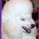 Nose to Toes Pet Services - Pet Grooming, Clipping, & Washing - 306-343-3647