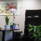 Oakville SHT Acupuncture & Herbs Clinic - Acupuncturists - 905-815-1818