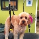 Style & Grace Pet Salon - Pet Grooming, Clipping, & Washing - 506-214-6604