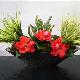 Fleuriste La Fée Fleurette J B - Fleuristes et magasins de fleurs - 450-929-3033