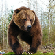 Artistic Wildlife Creations Inc - Taxidermists - 250-830-0636