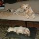 Pegabo Pets - Kennels - 604-487-0476