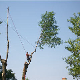 Emondage SBP - Service d'entretien d'arbres - 450-880-1592