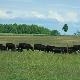 B & L Farm Services Ltd - Hardware Stores - 519-363-3308