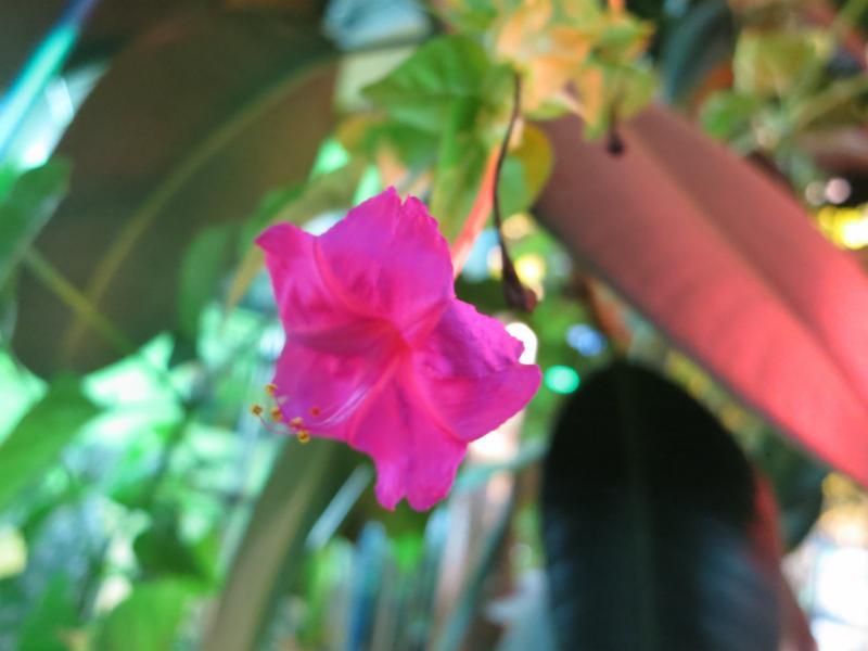 All Seasons Garden Centre Inc - Photo 4