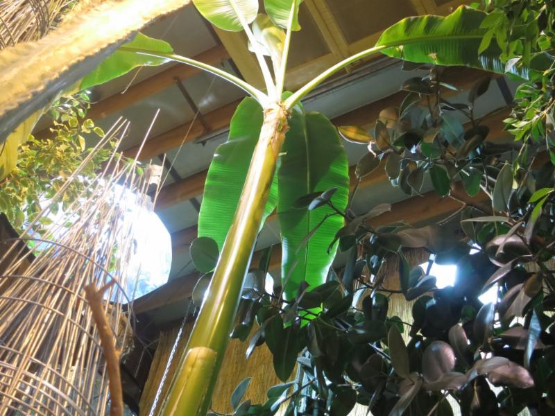 All Seasons Garden Centre Inc - Photo 2