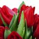 Ladybug Florist In the Village - Fleuristes et magasins de fleurs - 416-922-9971