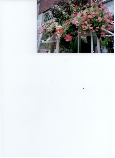 Florist Royal (Gala D'Outremont) - Photo 4