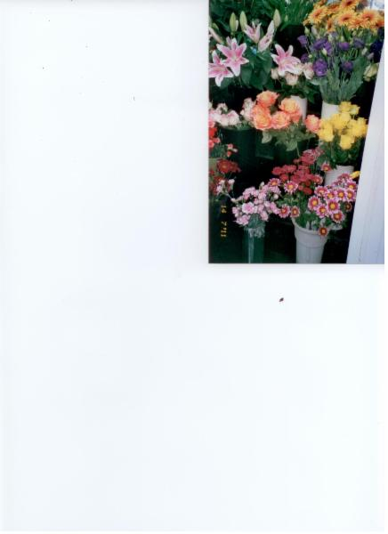 Florist Royal (Gala D'Outremont) - Photo 3