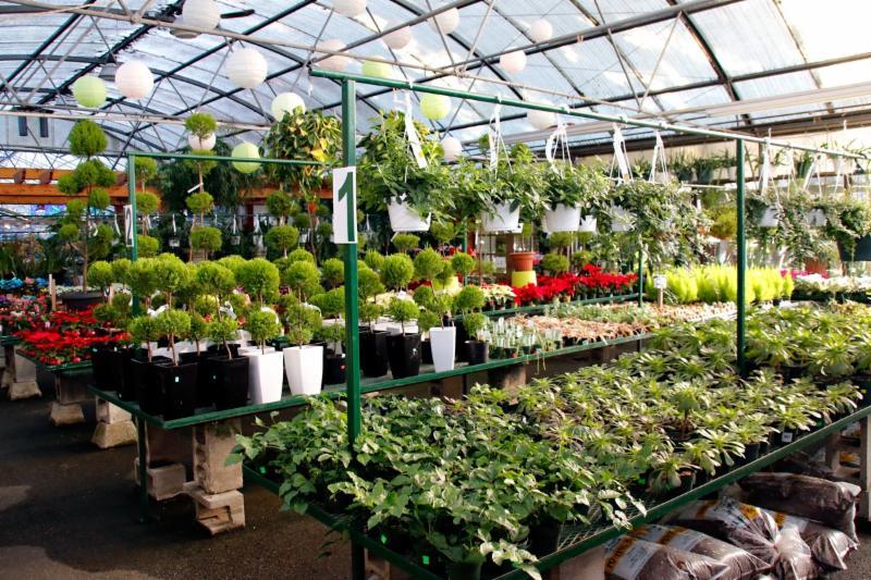 99 Nursery & Florists Inc - Photo 1