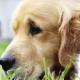 Valley Veterinary Hospital - Magasins d'accessoires et de nourriture pour animaux - 506-452-1117