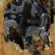 Associated Victoria Pest Control Ltd - Extermination et fumigation - 250-477-0322