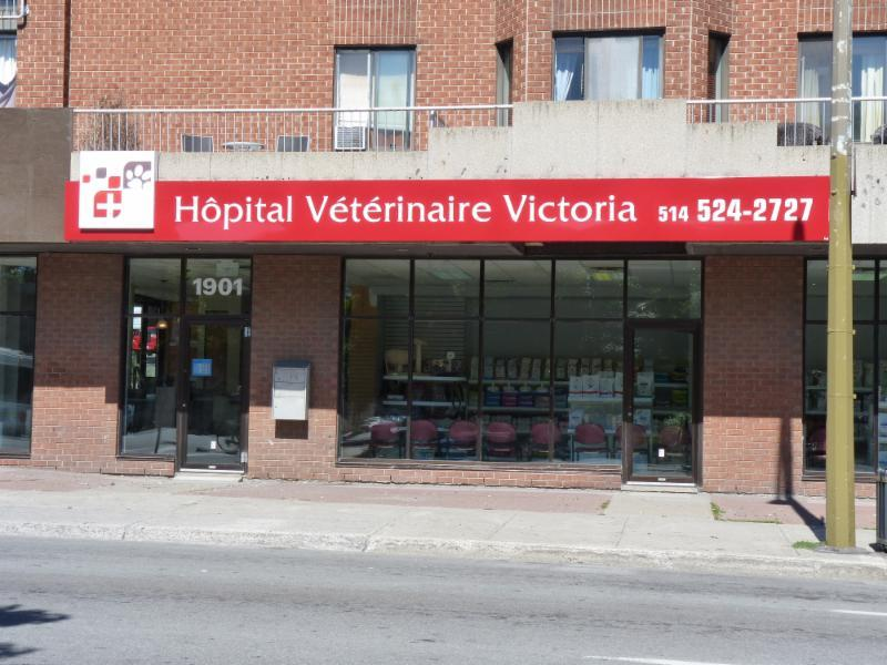 Hôpital Vétérinaire Victoria Verdun - Photo 1
